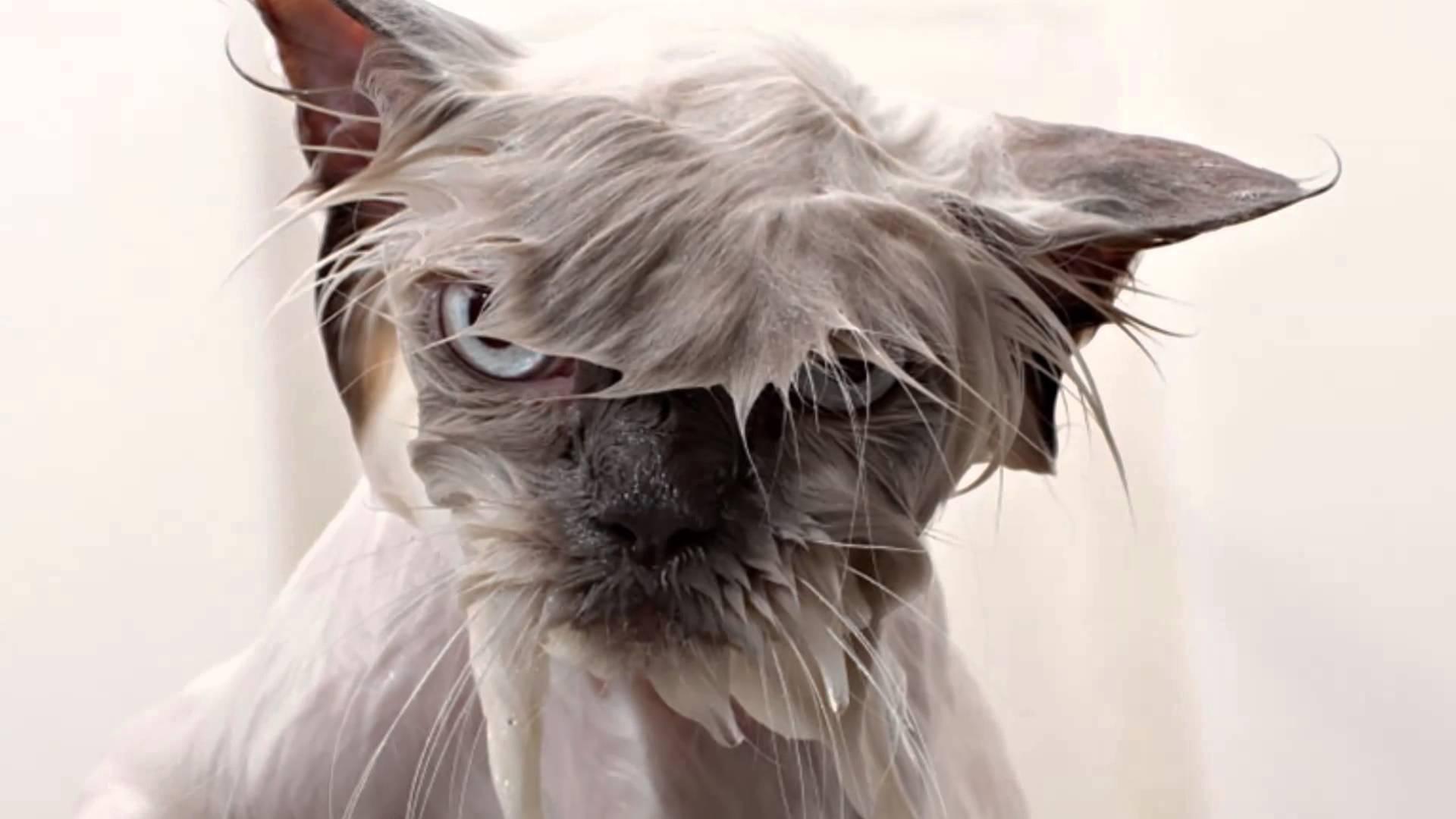Islak kedi